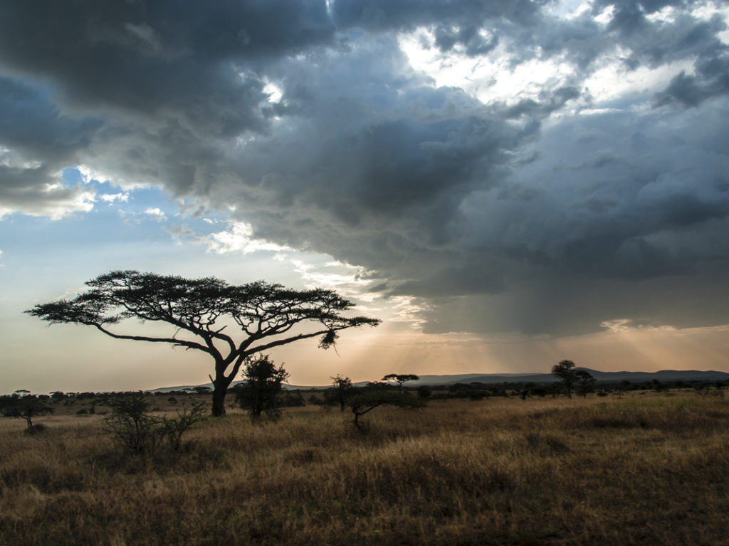 tanzania parchi parco parks reserve national geographic